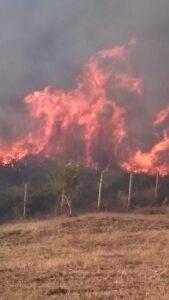 incendio ficoncella2